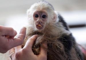 Обезьяну Джастина Бибера может отобрать немецкий зоопарк
