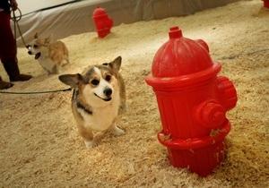 Женева вводит налог на собак