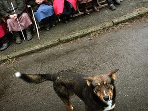 В Киеве планируют построить приюты для бездомных животных