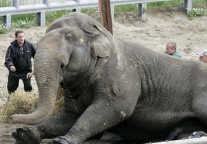 В Киевском зоопарке умер слон
