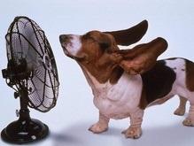 В Украине до конца недели будет жарко