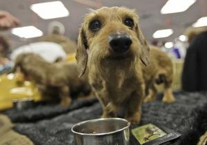 В Украине могут ужесточить ответственность за жестокое обращение с животными