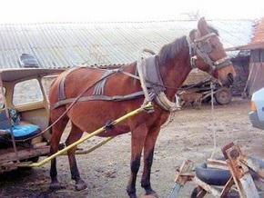 Румын погиб из-за пьяной лошади