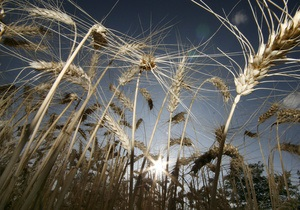 Участники рынка: экспорт зерна из Украины пошел на спад