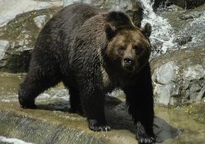 В Киевском зоопарке медведи впали в спячку