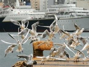 В пригороде австралийского Перта обнаружены сотни мертвых птиц