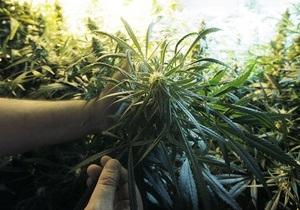 В Бортничах под Киевом растет двенадцать гектаров конопли