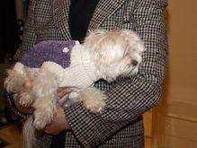 Суд Нью-Йорка лишил собаку $10 млн наследства
