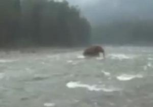 Британские СМИ опубликовали видео с мамонтом, переходящим реку на Чукотке