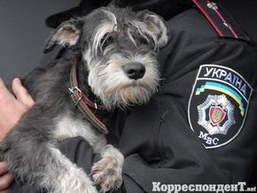 Прокурор: Киевская область стала одной из самых криминогенных в Украине