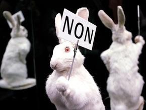 Нашествие кроликов в Стокгольме: животных перерабатывают на биотопливо