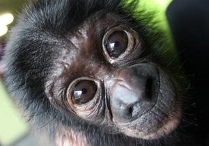 Шимпанзе способны строить планы на будущее - ученые