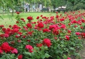 В Донецке иностранцы чаще всего фотографируют розы