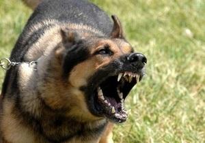 Новости Житомирской области - бешенство - В Житомирской области бешеный пес покусал 11-летнюю девочку