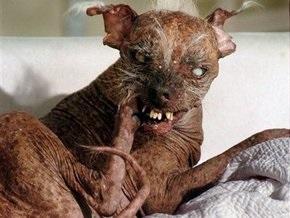 В США скончалась самая страшная в мире собака