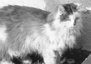В Швейцарии по ошибке усыпили одного из самых старых котов в мире