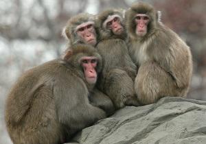 В зоопарке Караганды обезьяны в мороз согреваются вином