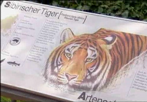 В Кельне тигр загрыз сотрудницу зоопарка