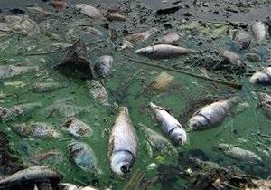 В Херсоне в реке погибли почти девять тысяч карасей