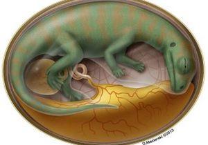 Палеонтологи заглянули внутрь яйца динозавра