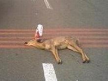 На Московском проспекте в Киеве сбили дикую косулю