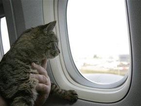 Британский суд отменил депортацию боливийца из-за кошки