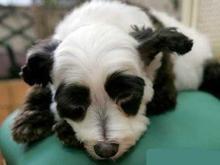 Украинские ВУЗы отказываются от экспериментов над животными