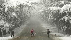 Снегопад в Грузии: 10 тыс. жителей остались без света