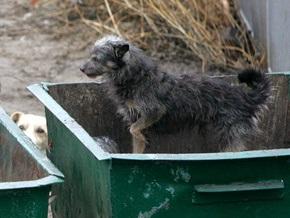 Власти Черкасс решили давать по 10 гривен за каждую бездомную собаку