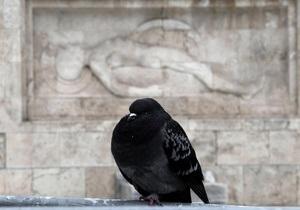 В мозге голубей нашли нейроны магнитной навигации