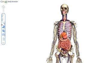 Google создал трехмерную анатомическую модель человеческого организма