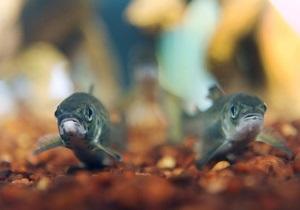 Жирная рыба снижает риск развития рака печени