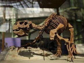 Исследование: Динозавры могли быть теплокровными