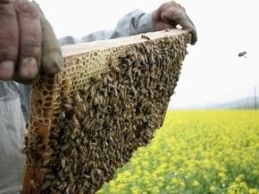 В США по неизвестным причинам массово гибнут медоносные пчелы