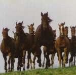 Где в Киеве можно покататься на лошади верхом и во сколько обойдется это удовольствие
