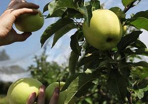 Корреспондент: Каждое пятое яблоко, съеденное украинцем, привезено из Европы