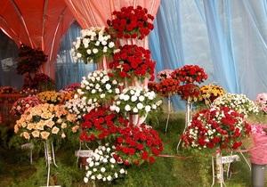 Новости Киева - цветы - В Киеве посадят 15 миллионов цветов, которые специально вырастили в теплице
