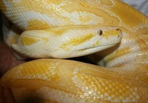Парижские полицейские нашли в Сене змею весом 40 кг