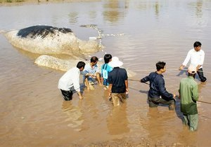 Тысячи вьетнамцев пришли проститься с погибшим китом