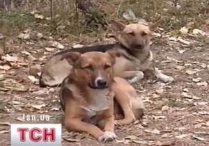 В Николаеве женщину до смерти загрызла стая бродячих псов