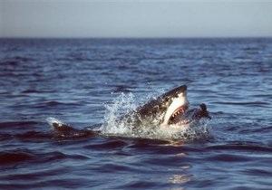 Минздрав Египта подтвердил, что от укусов акулы пострадал один украинец