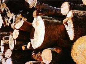 В киевском сквере имени Стуса неизвестные срезали более 100 деревьев