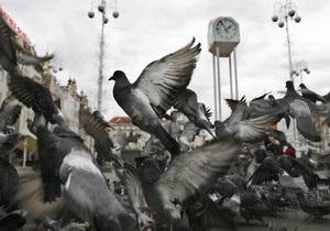 Почтовые голуби оказались быстрее интернета