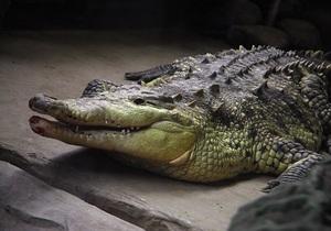 Трехметровый крокодил прогулялся по улицам Франкфурта