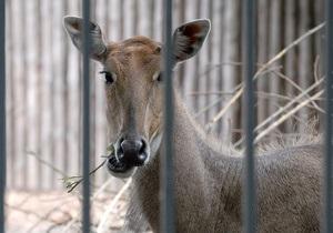 Мэрия намерена вернуть киевский зверинец в Международную ассоциацию зоопарков