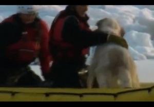 В США спасатели вытащили собаку из ледяной воды