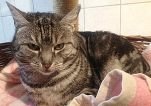 В Германии кошки, принадлежащие преступнице, задолжали за проживание в приюте