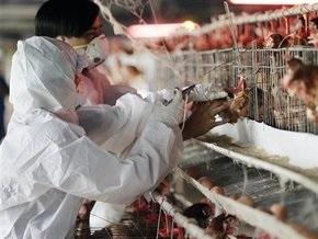 В Германии обнаружили птичий грипп