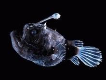 Французы выловили рыбу на рекордной глубине