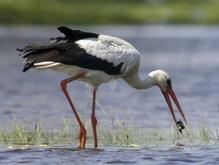 Раскрыт механизм ориентирования птиц в пространстве